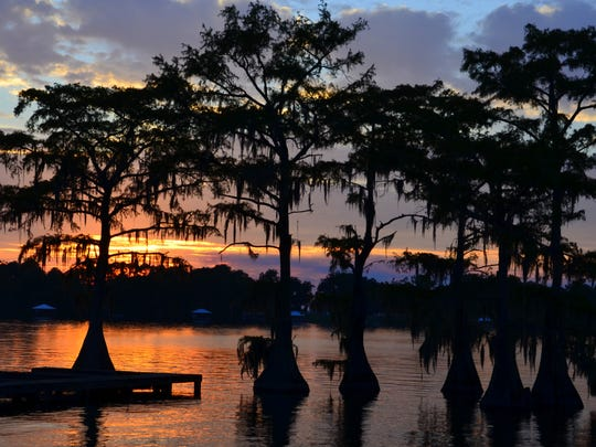Cypress Trees in Silhouette: Cypress trees silhouetted against an evening sky at Lake Bruin State Park.