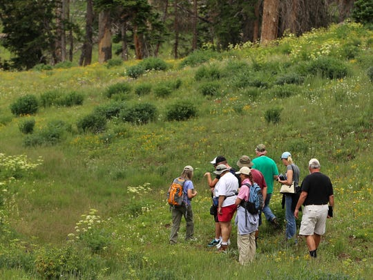 Guided wildflower walks are part of the annual Wildflower Festival at Cedar Breaks National Monument through Sunday.