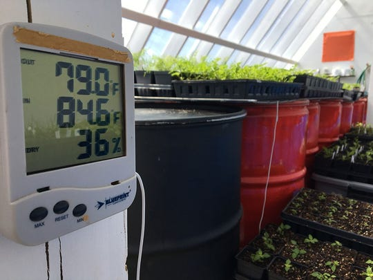 Barrels of water in the greenhouse absorb solar heat and release it at night or when outside temperatures drop.