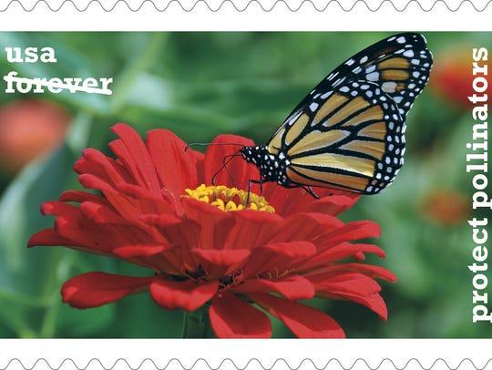 Monarch butterfly (Danaus plexippus) sipping nectar