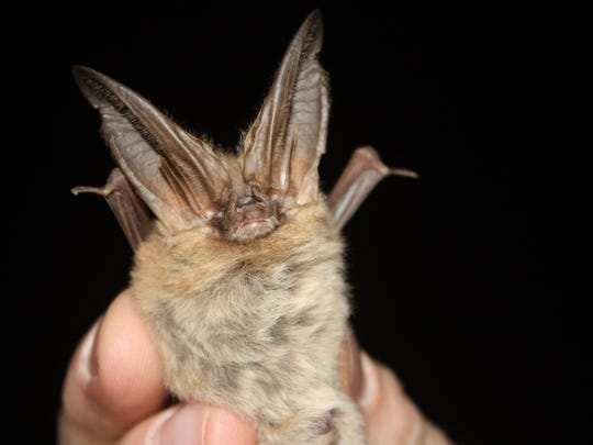 The forest is home to 16 kinds of bats, some of them