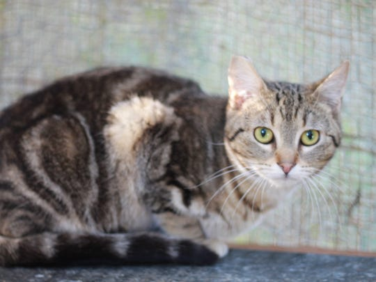 Feral Cat Awareness Team in Dallas has about 20 cats that are looking for barn homes.