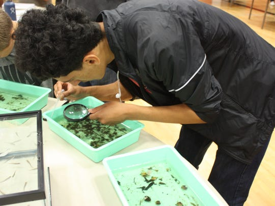 Francisco Ramos, a junior from North Salem High, inspects the water samples from Mill Creek for microorganisms that inhabit the water at the Youth Environmental Conference at North Salem High School on Saturday, May 4, 2016.