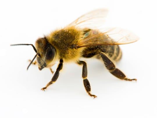 Most people don't realize that honeybees are capable