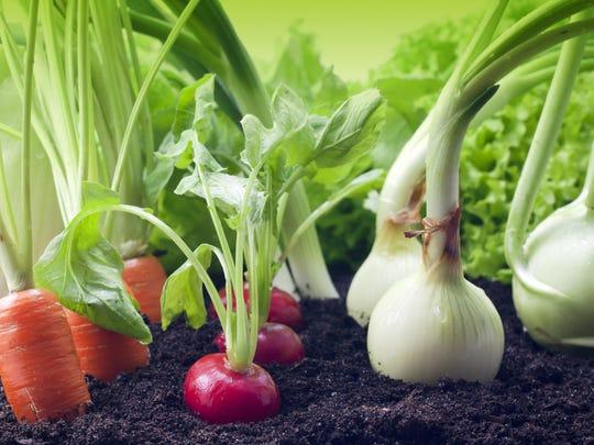 Organic vegetables growing in the garden