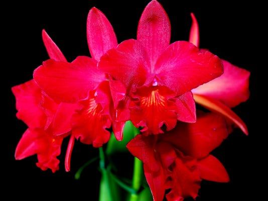 636599928239418728-orchid.JPG