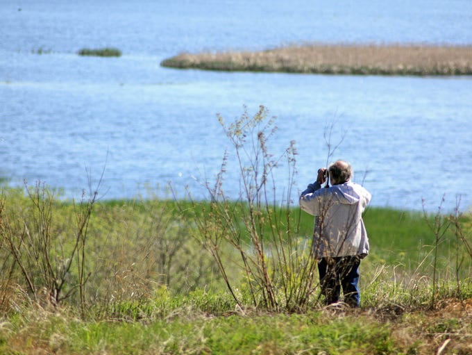Horicon Marsh is a prime spot for birdwatching, especially