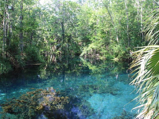 Silver Springs feeds the Silver River, which ends after only four miles and empties into the Ocklawaha River and then into the St. Johns.