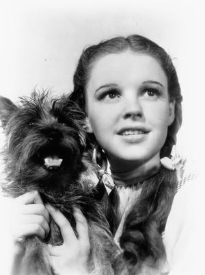"Judy Garland as Dorothy in the 1939 MGM movie ""The Wizard of Oz."" That's Toto she's holding."