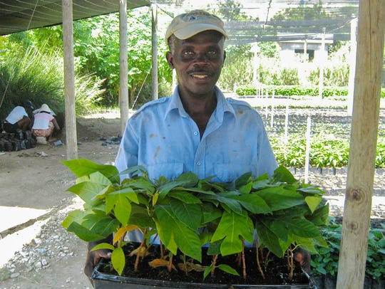 A man holds a tray of young breadfruit plants in Haiti.
