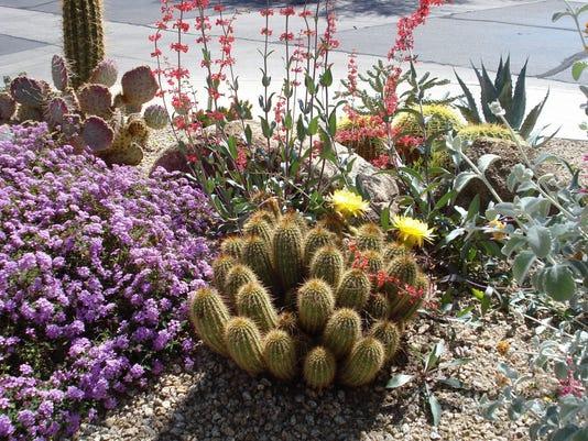 635627167340810589-desert-landscaping