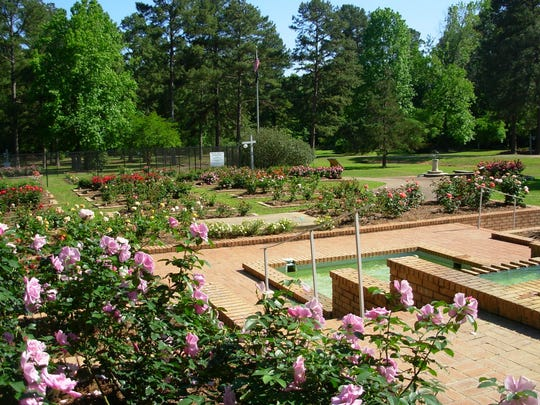 The American Rose Center has been a permanent fixture in Northwest Louisiana since 1974.