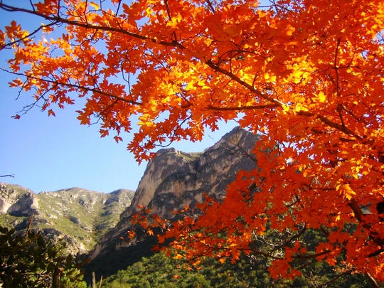 If you missed the fall colors of the maple trees at McKittrick Canyon, you can still enjoy a hike on Kids to Park Day.