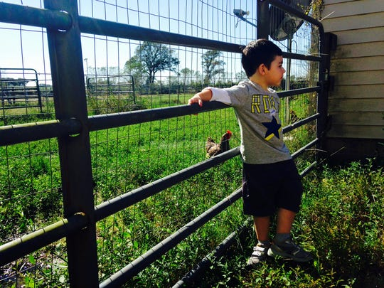 Dylan takes in the scenery at DnD Farm in Maurice last weekend.