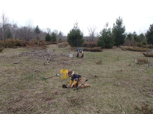 Forest Recovery Project