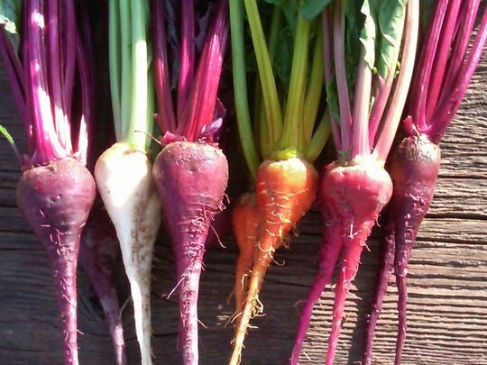 Duncan's Trading Company grows Bull's Blood, Avalanche white, Detroit red, Gold, Chioggia and Forono beets.