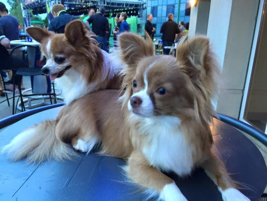 Precious, left, and Gizmo, right, spend time with their
