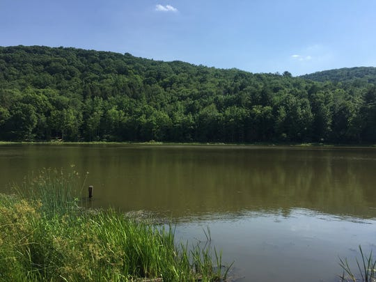 The isolated pond at the Binghamton University nature preserve.