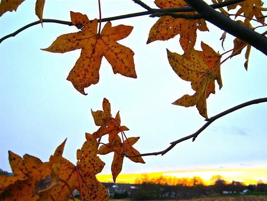 Fall leaves may not be as intense this year.