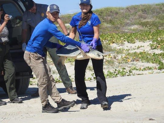 Padre Island National Seashore staff prepare to release