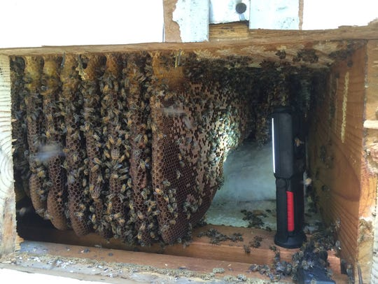 Drew Ruegg says beekeepers prefer to see the colony
