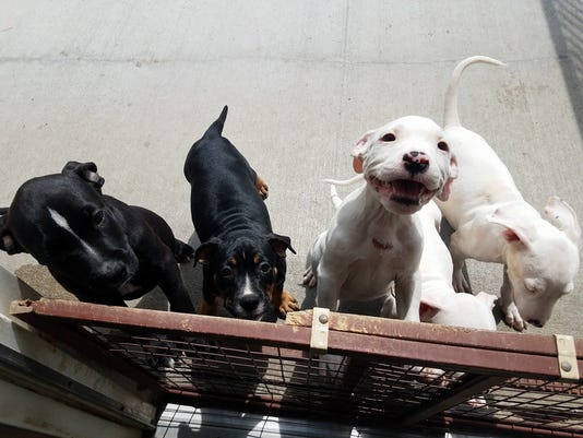636398705348001317-puppies-1.jpg