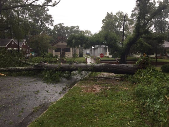 A tree uprooted by Irma blocks Creswell Street in Anderson.