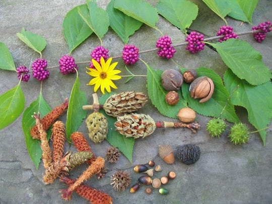 Nature's bountiful autumn harvest.