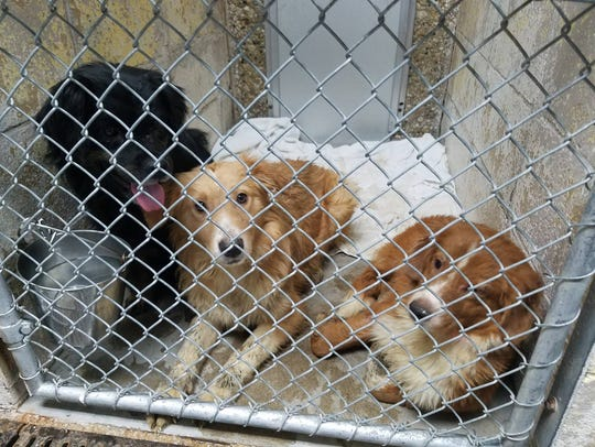 These dogs were among 52 rescued and taken to Safe