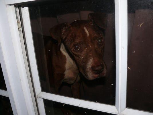 636473761900835914-pitbull-rescue.jpeg