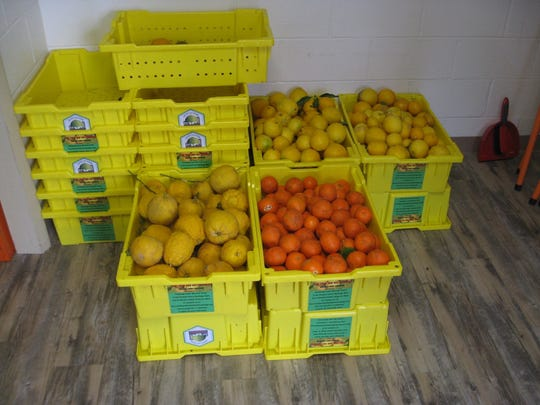 Fruit harvested from local trees for the Fruit and Nut Exchange.