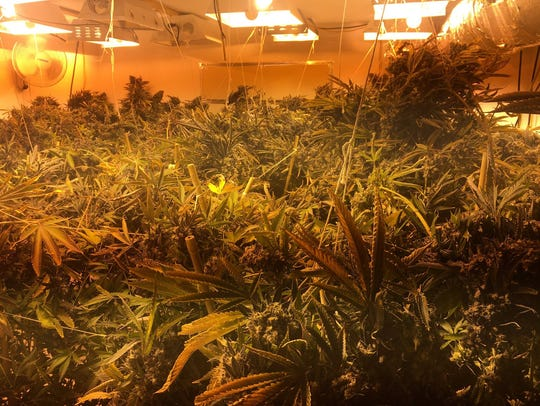 Police found more than 20 pounds of marijuana and 32