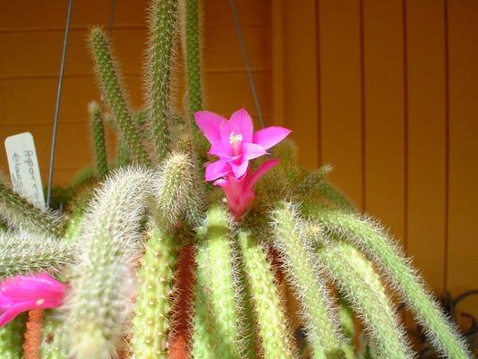 636523963316602585-flower.jpg