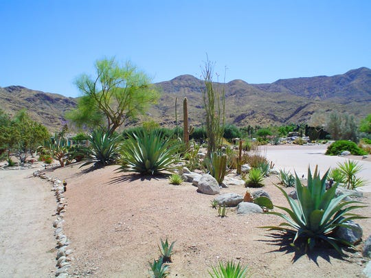 Plants are grown on the gentle side of this mound, graded with a wide top able to support large plants.