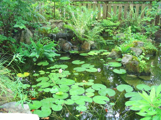 This garden pond, planted with all native plants, provides