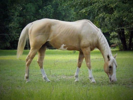 636656044467343782-horses4.jpg