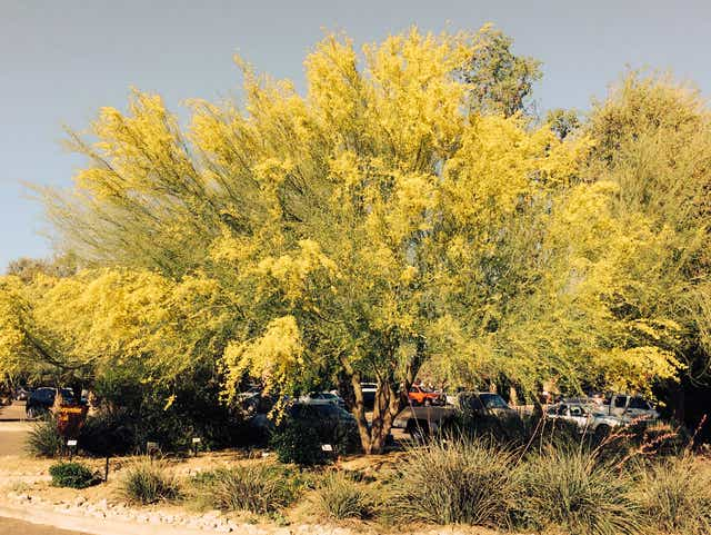 How To Choose And Plant The Right Tree For Your Az Home