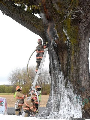 Boone County Fire Protection District firefighters spray foam inside the 350-year-old Burr Oak tree near McBaine on Friday after it was thought to have been struck by lightning early this morning. A lower limb was knocked several feet from the tree into the soybean field where several passersby picked pieces from it as souvenirs. Firefighters extinguished the smoking tree while deputies and a highway patrolman directed traffic. No one was injured.