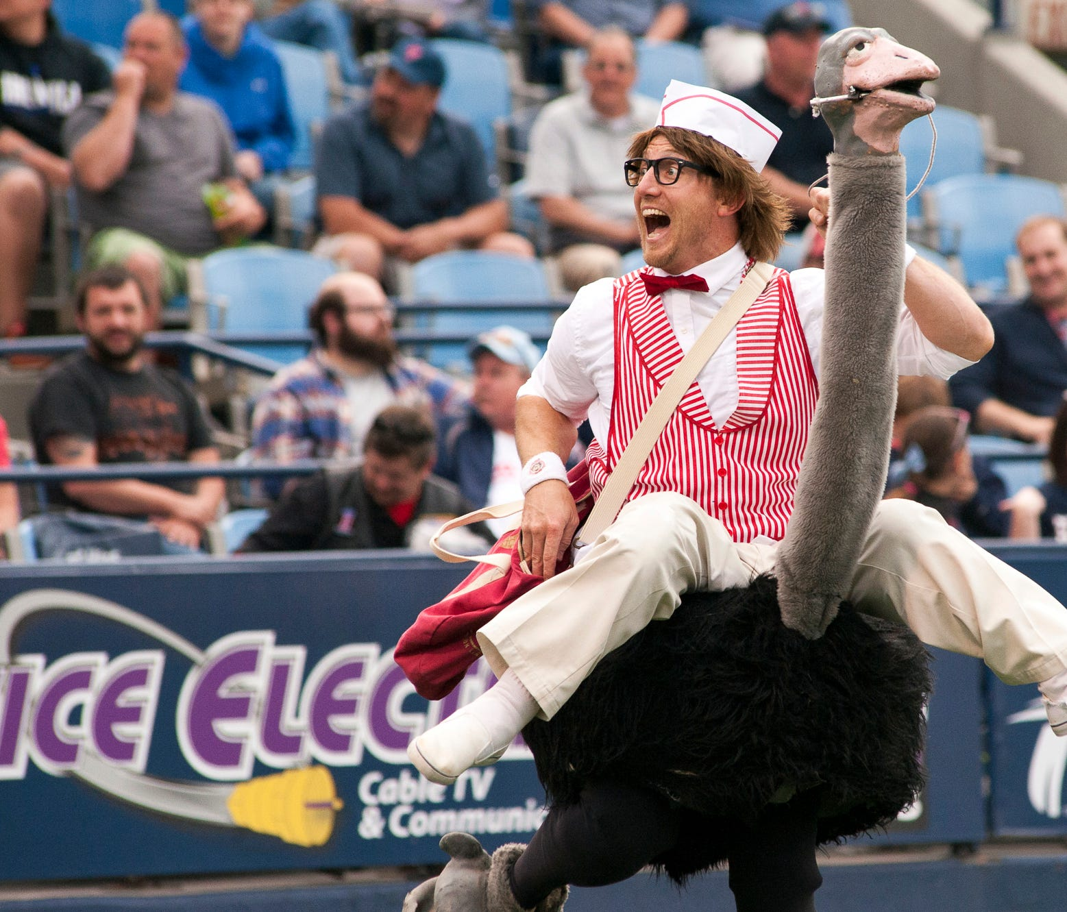 While the minor leagues are rich in zany mascots, there may be no weirder then the Fightin Phils' ostrich-riding vendor, who tosses hot dogs into the stands in Reading, Pa.