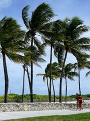 A couple jogs along the paved path of South Beach in Miami as palm trees bend in the stiffening wind brought by Hurricane Irma on Sept. 8, 2017.