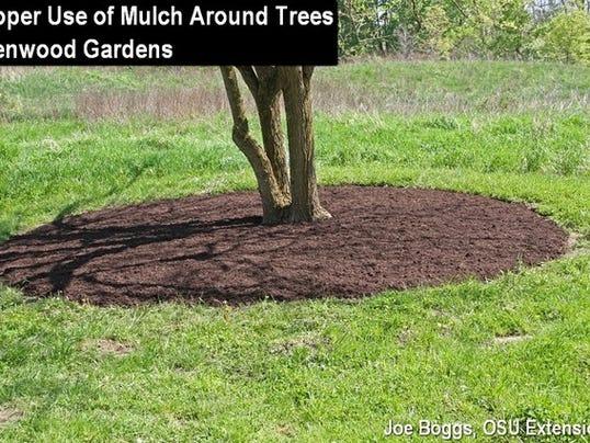 636603400421423645-propermulchtrees.osu.jpg