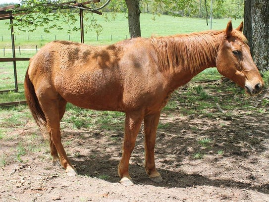 Crimson is one of the horses to be offered for sale