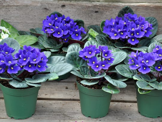 Flowering plants such as African violets are especially