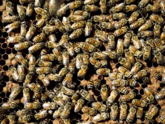 A swarm of bees killed a man in Yavapai County on July