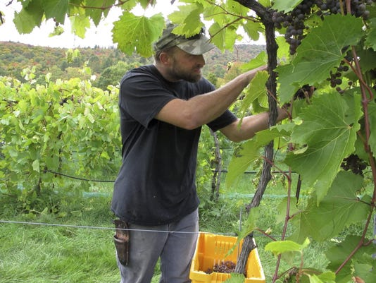 Dry Weather Vineyards
