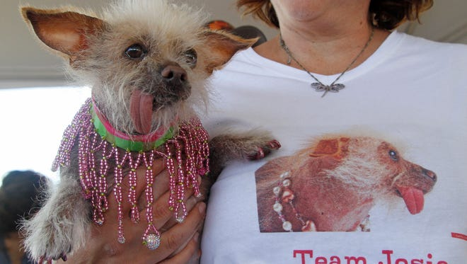 Josie, from Tucson, waits before the start of the World's Ugliest Dog Contest, at the Sonoma-Marin Fair in Petaluma, Calif.