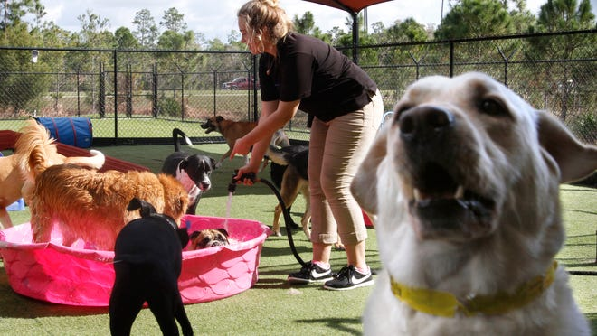 Kennel tech Bailey Hawkins, center, fills a plastic pool with water for dogs staying at the All American Pet Resorts off Treeline Avenue, Fort Myers.