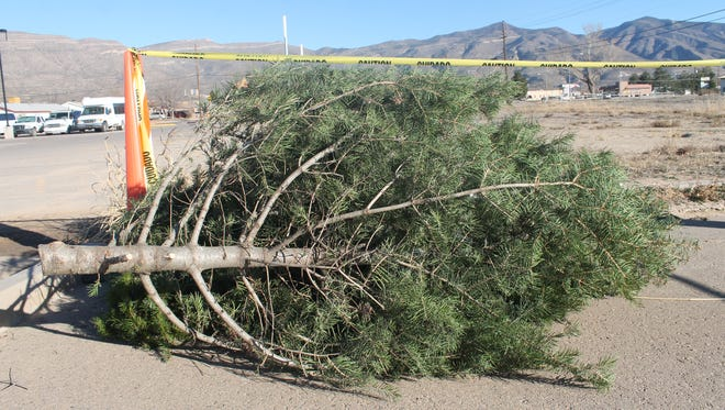 Old Christmas trees sit in a designated area of the Alamogordo Senior Center parking lot.