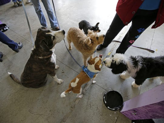 Dogs gather near people enjoying snacks as The C-K9 Club holds an open house to welcome dogs and their owners for a social afternoon Saturday, November 19, 2016, in Neenah, Wisconsin. Ron Page/USA TODAY NETWORK-Wisconsin