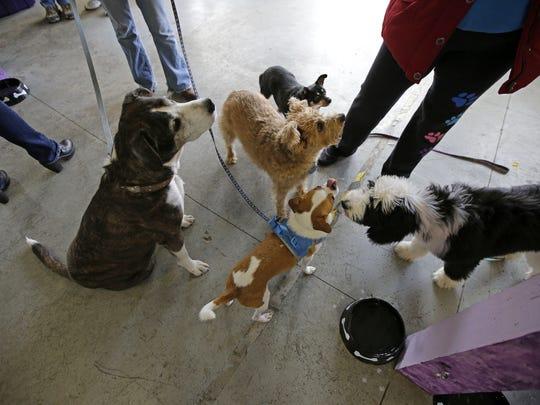 Dogs gather near people enjoying snacks as The C-K9